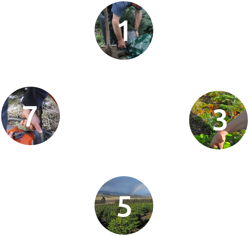 8 Years in the Life of a Christmas Tree