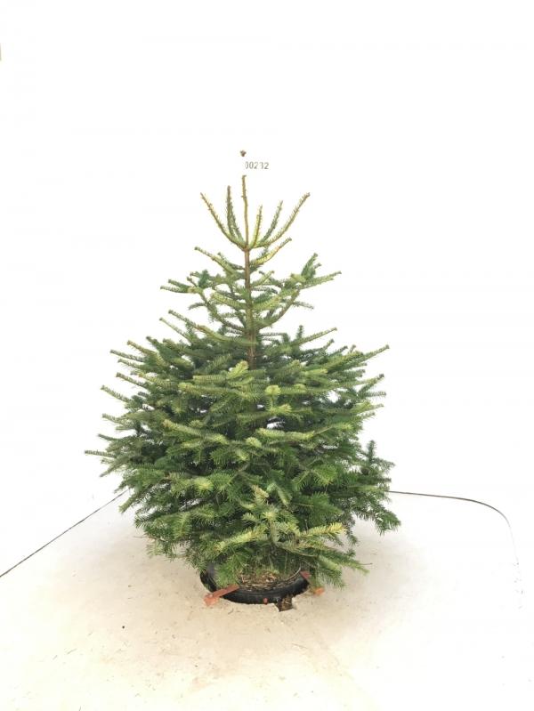 closest christmas tree farm to florida